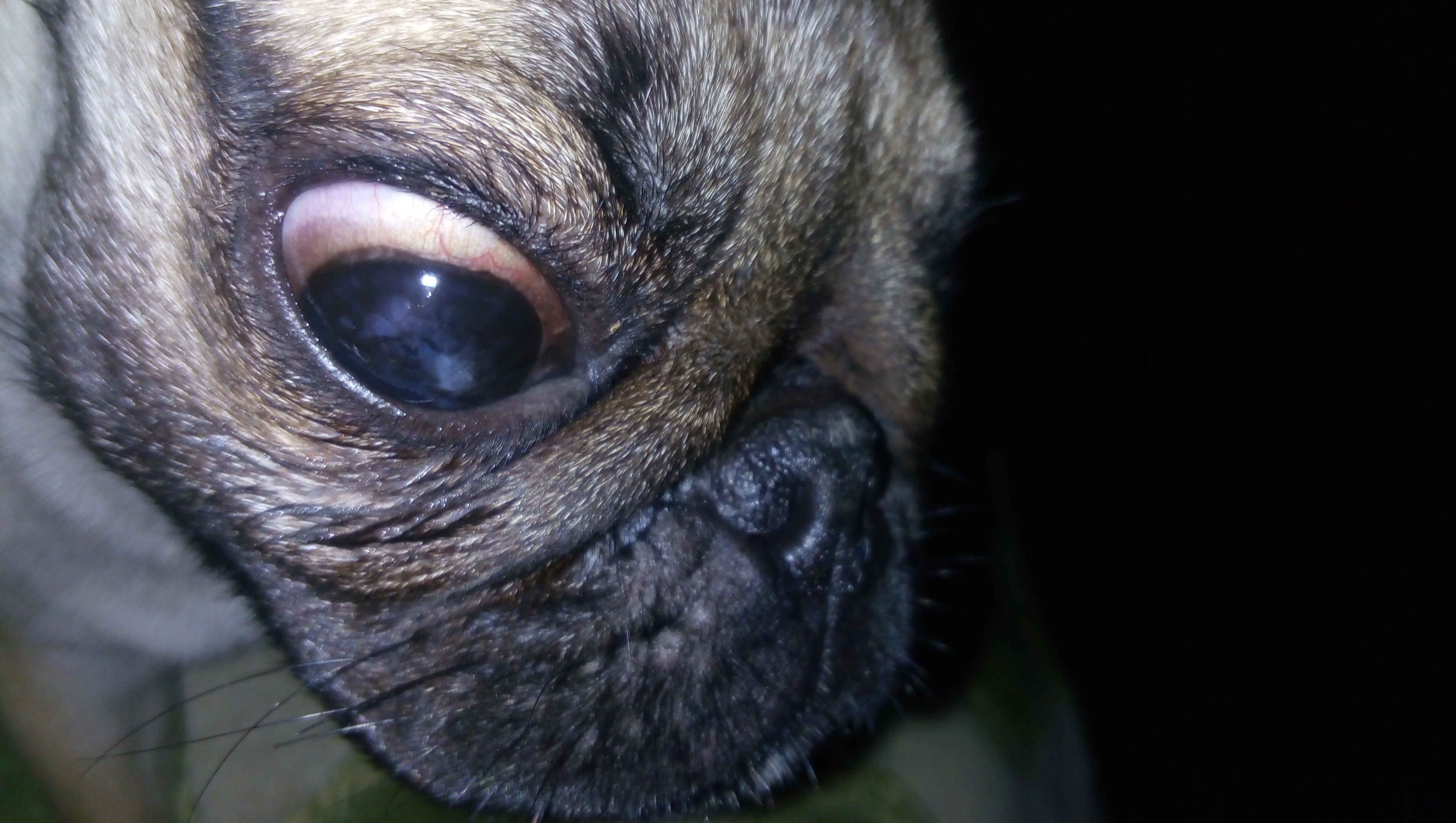 Покусали собаки, остался один этот глазик. Какое возможно лечение?