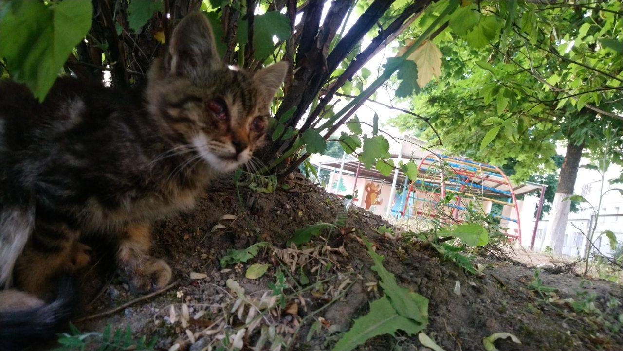 Котёнок с больными глазами